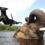 unusual-animal-friendship-3-2